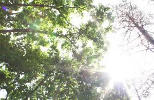 くずまき高原牧場 風景 2