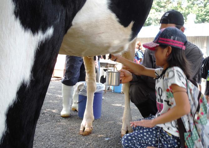くずまき高原牧場 牛の乳搾り体験