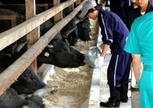 くずまき高原牧場 肥育牛の世話体験
