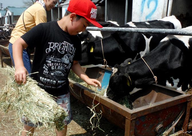 くずまき高原牧場 仔牛の世話体験